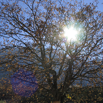 herbst_350px