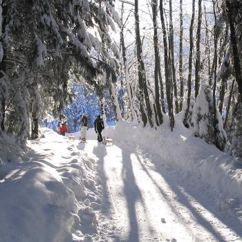 winter_350px