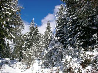 Winter in der Leutasch